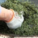 Té verde Bi Luo Chun, uno de los 10 grand crus de China Parte II: procesado, degustación y almuerzo