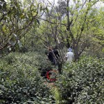 Plantaciones Bi Luo Chun