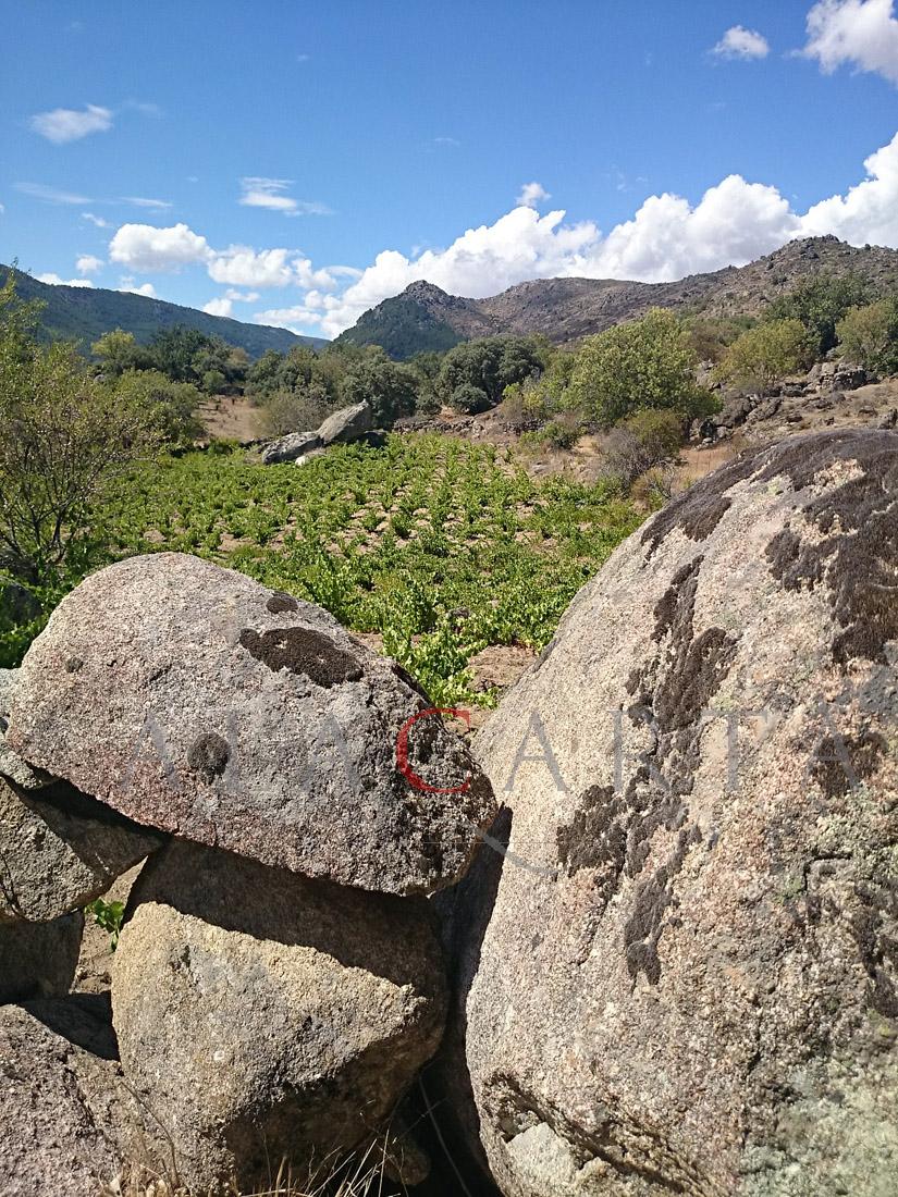 Vignedo Granitico Gredos