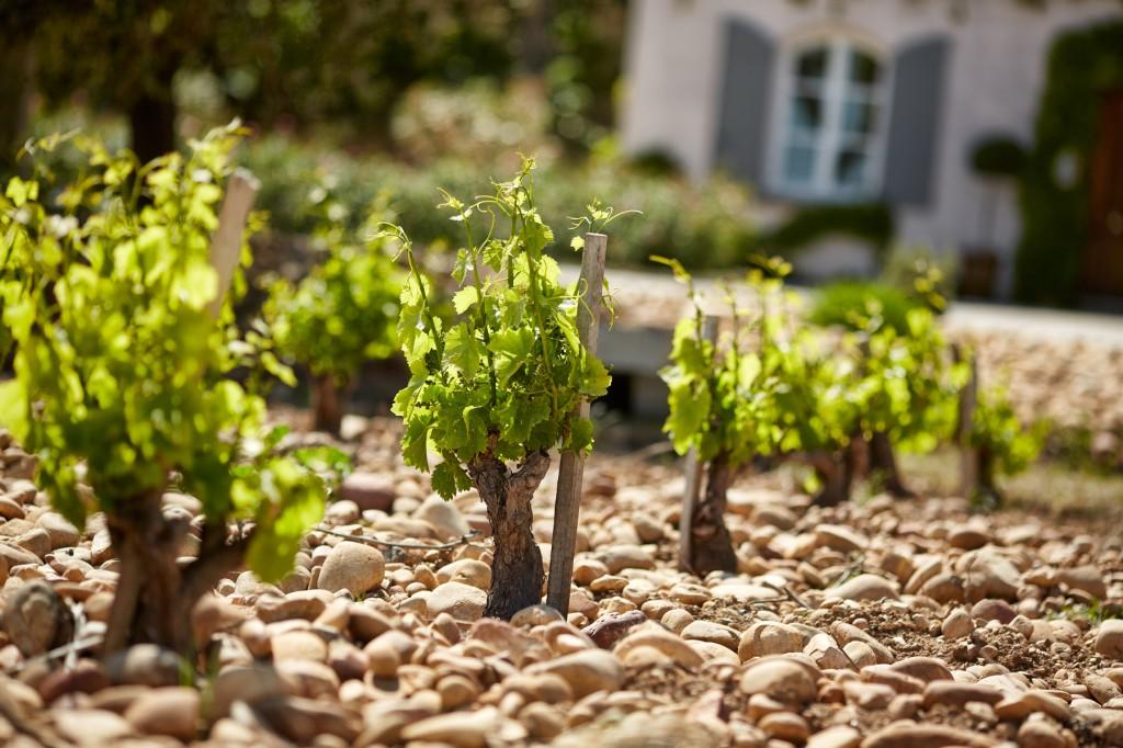 Vignes Beaucastel Perrin